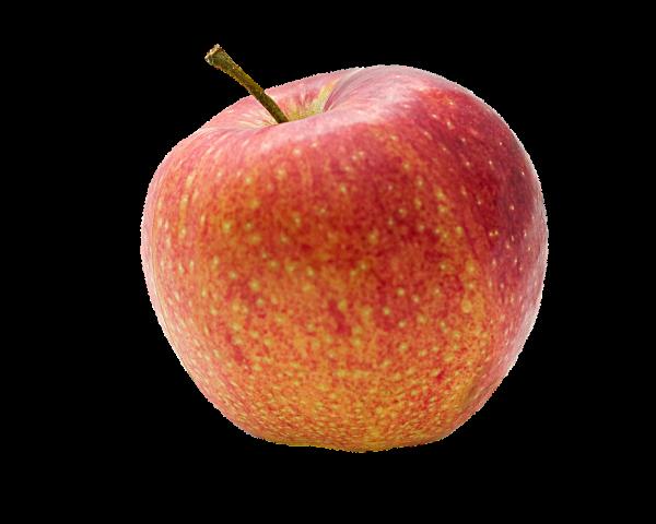 Frischer Apfel Elstar, 1 Stück