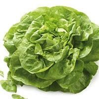 Frischer Kopfsalat